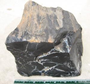 black-petrified-wood2-1024x963